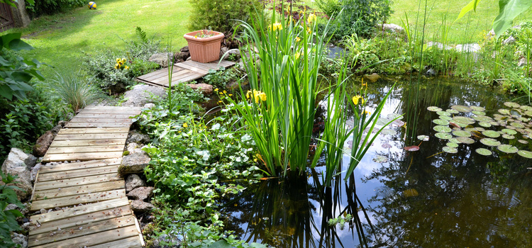 Fish and Garden Ponds in Burnham on Sea, Weston Super Mare and Bridgwater