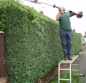 Hedge Maintenance, Trimming and Cutting