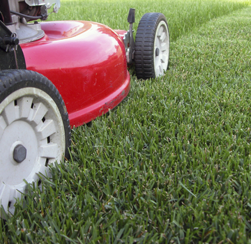 Commercial and Domestic Grass Mowing and Cutting in Burnham on Sea, Weston Super Mare and Bridgwater